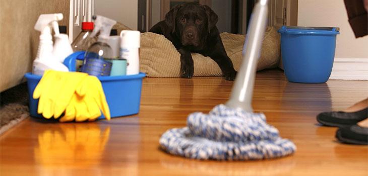Clasificarea produselor de curatenie care contin dezinfectanti